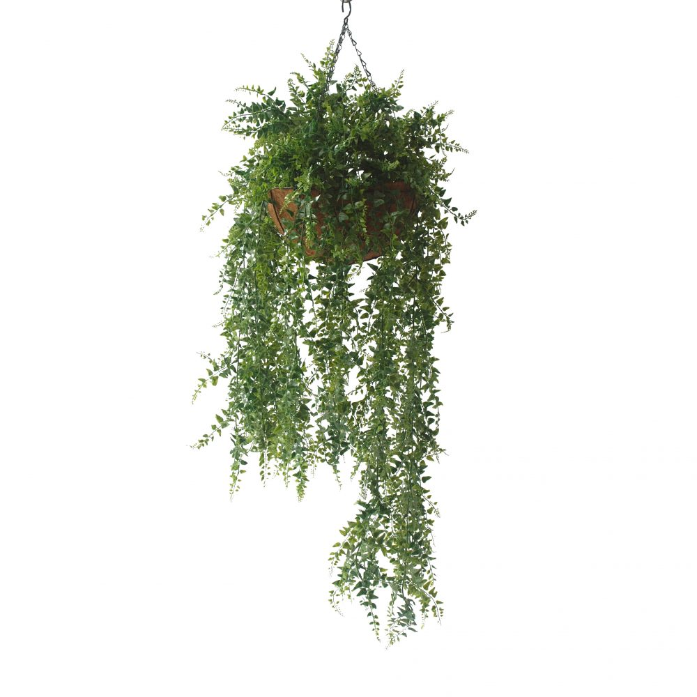 DOUBLE BAKER FERN IN HANGING BASKET 110CM