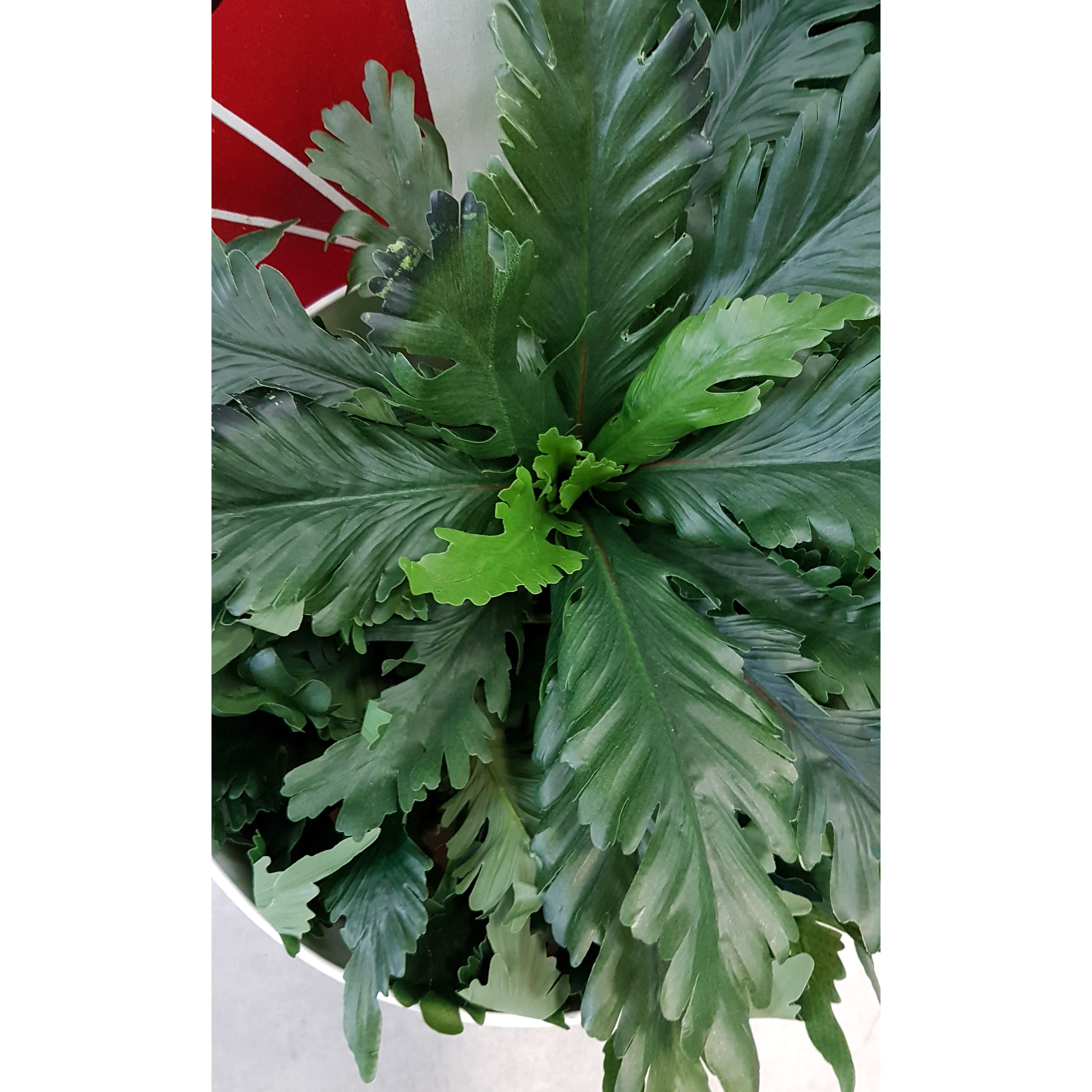 ARTIFICIAL CROWS NEST FERN
