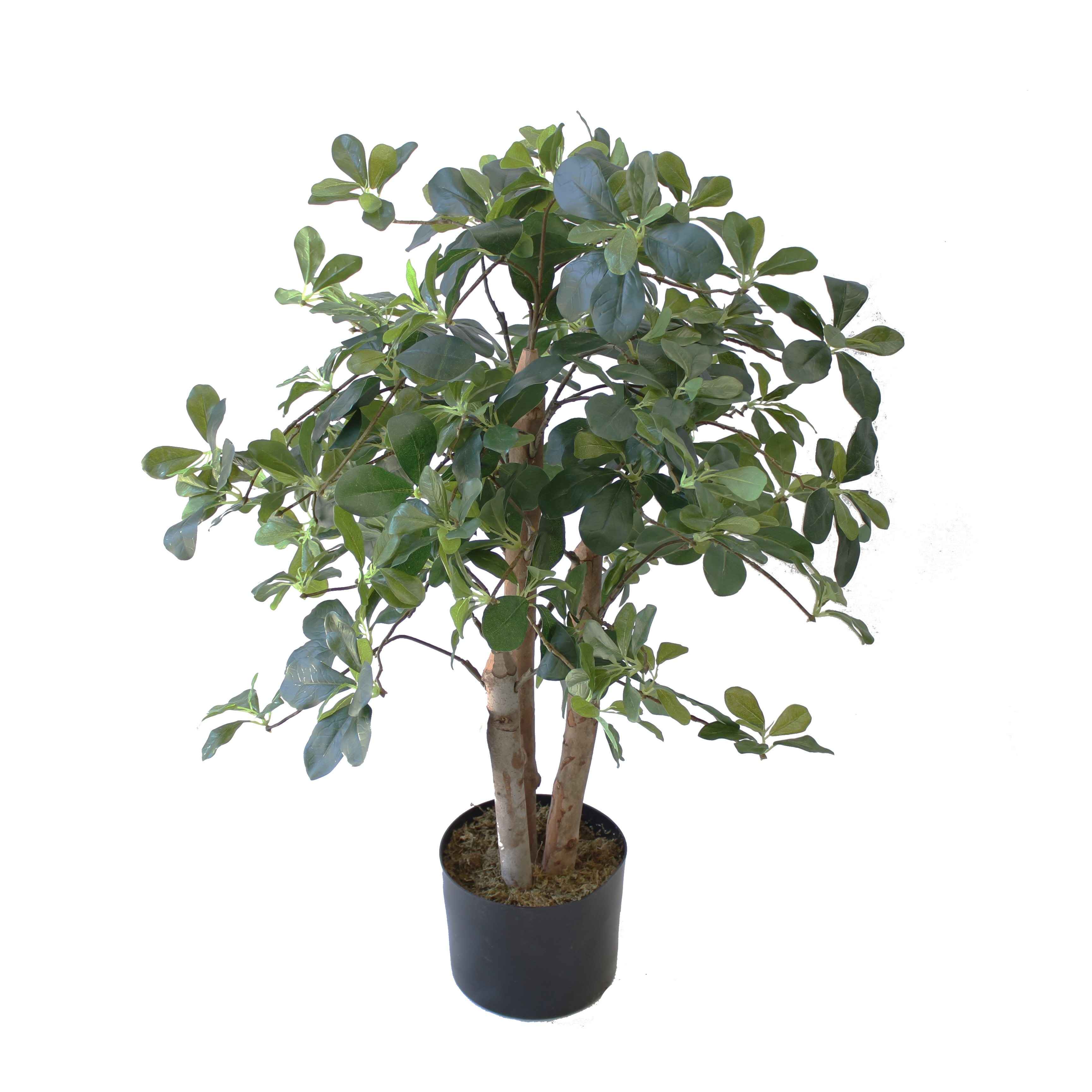 ARTIFICIAL SCHRIEFFER PLANT