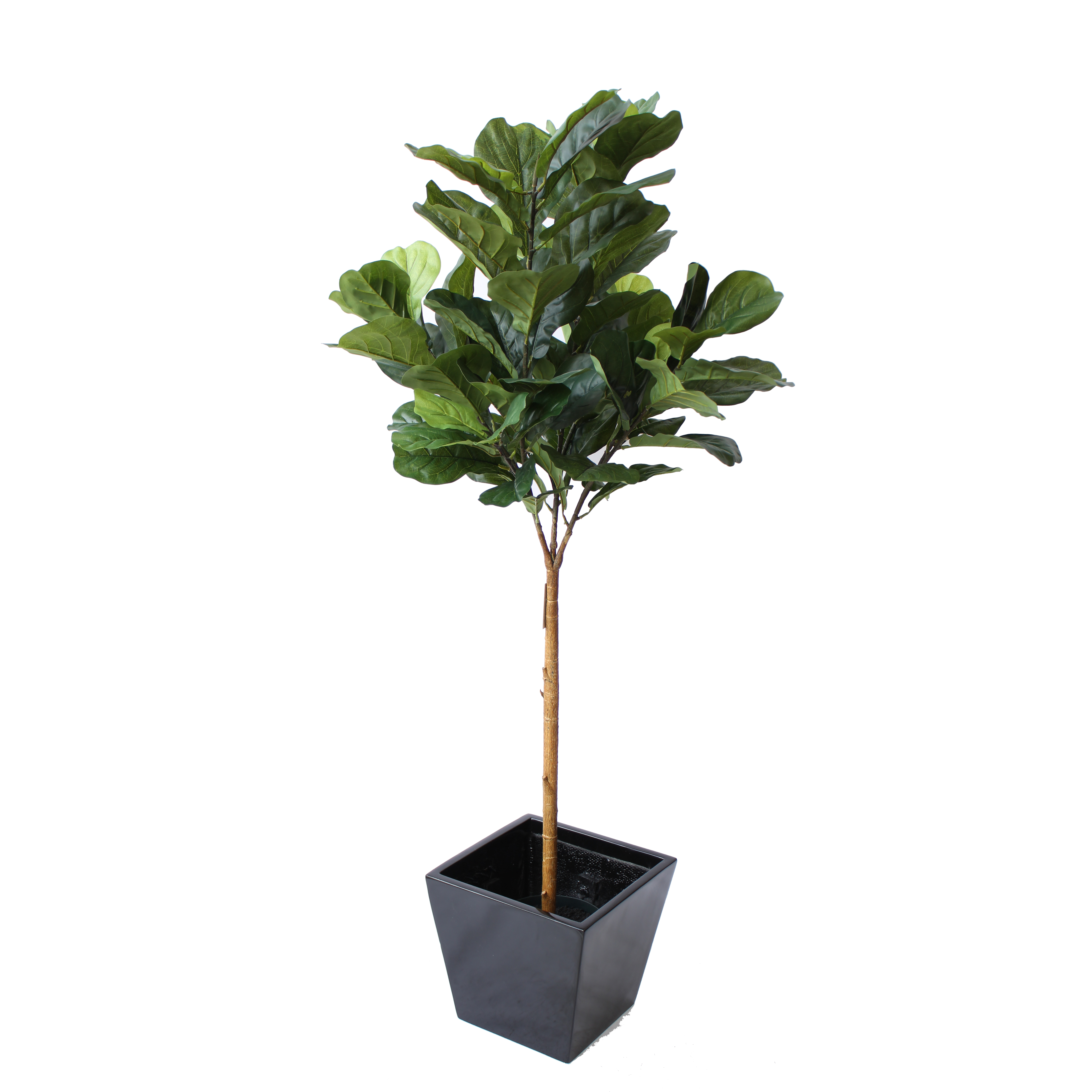 Artificial FIDDLE LEAF FIG TREE 1.5M IN FIBREGLASS POT