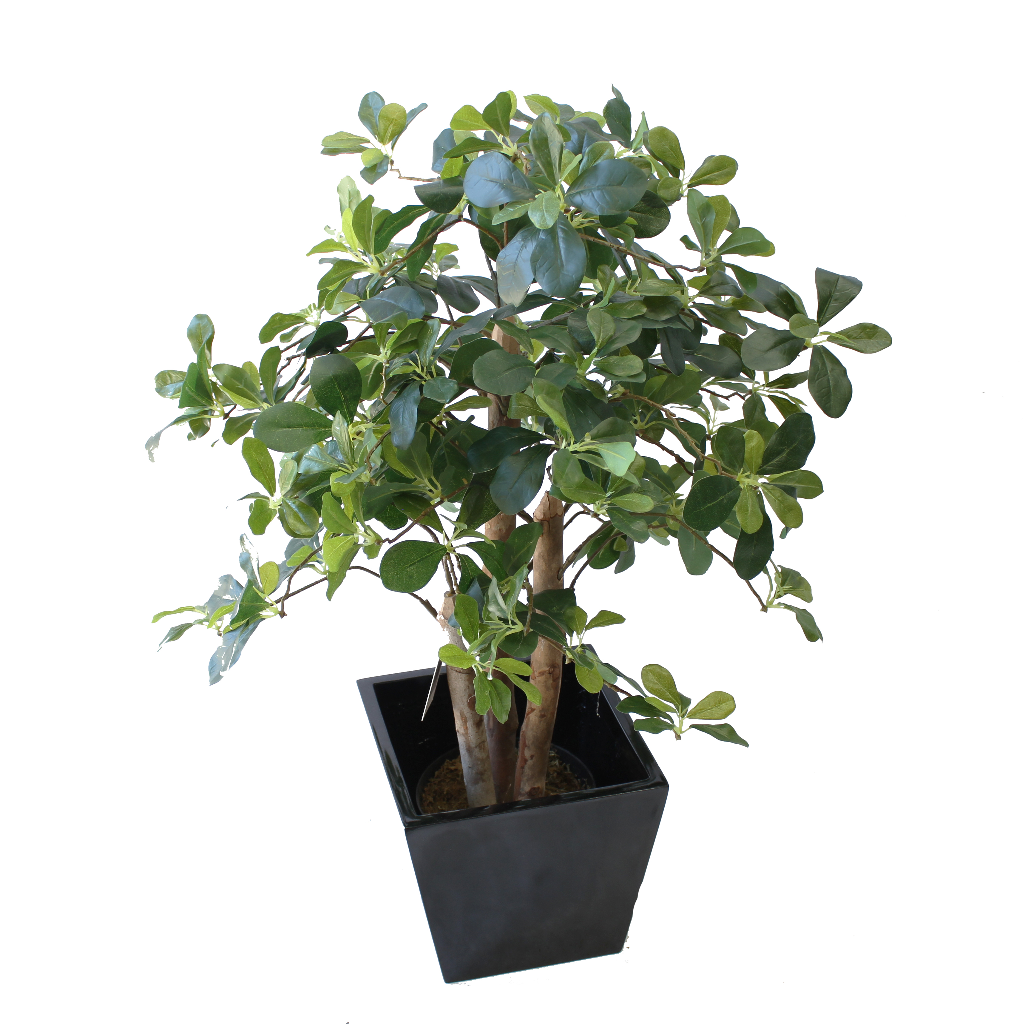 ARTIFICIAL SCHEFFELA PLANT 90CM WITH FIBREGLASS POT