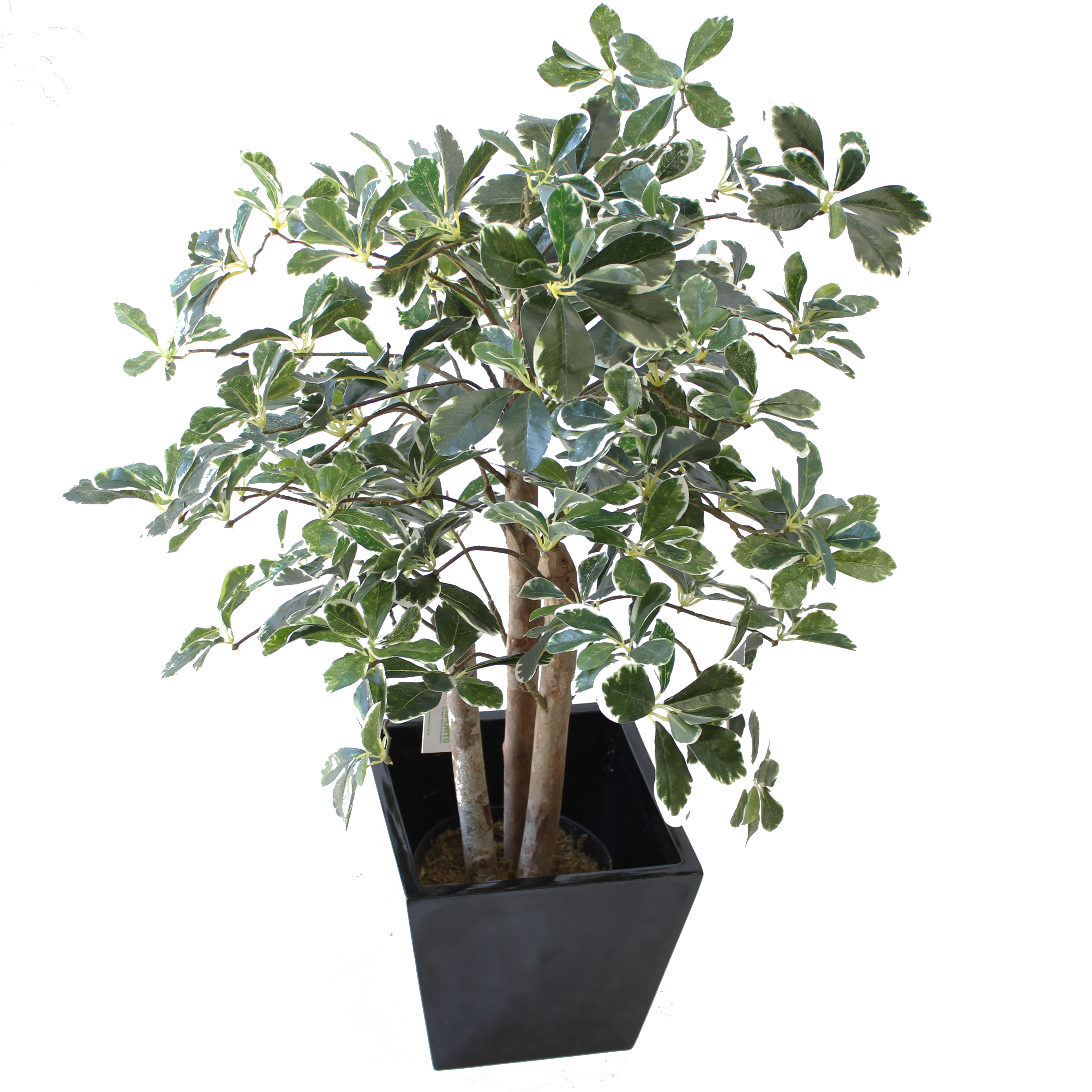 ARTIFICIAL SCHEFFELA PLANT 90CM VARIGATED WITH FIBREGLASS POT