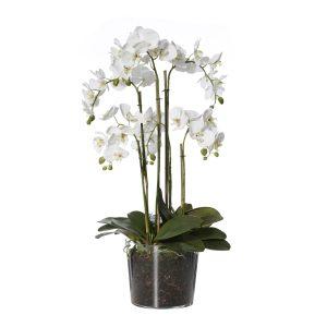 Phalaenopsis Mix-Flared Vase