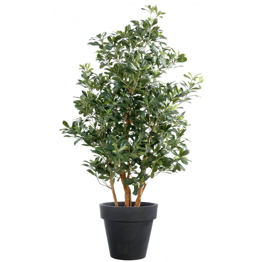 Artificial Pittosporum tree 1.2m